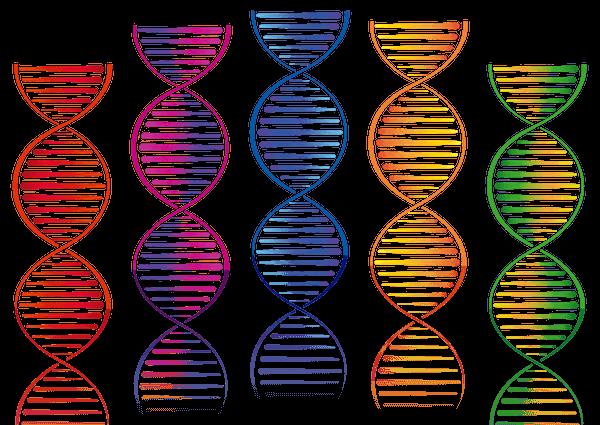 Análisis de ADN personalización