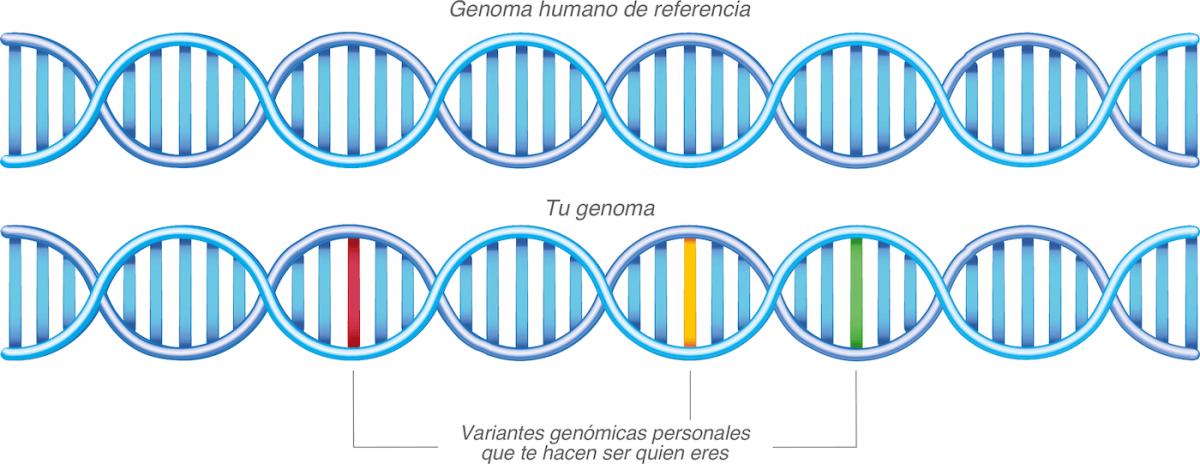 Análisis de ADN