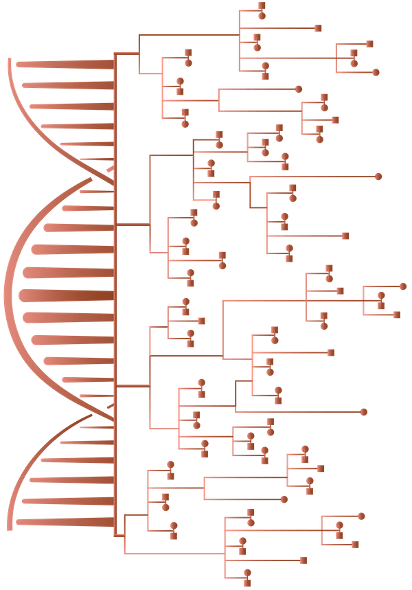 Próximo producto: análisis de ancestros.