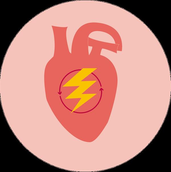 Análisis genético de rendimiento corazón