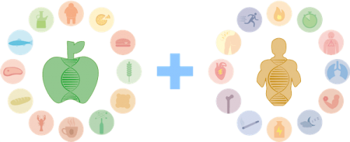 Paquete de Nutrición + Rendimiento | Microchip de ADN